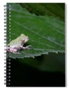 God's Tiny Tree Frog Spiral Notebook