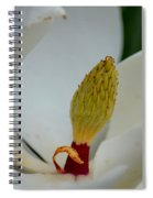 Gold Centered Magnolia Spiral Notebook