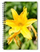 Gold Flower Spiral Notebook