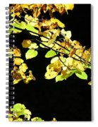 Gold On Black Spiral Notebook