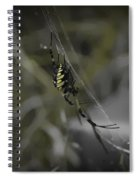 Gold Orb Weaver Spiral Notebook