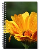 Gold Petals Spiral Notebook