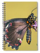 Gold Rim Swallowtail Butterfly Spiral Notebook