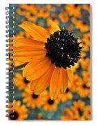 Gold Rudbeckia Blooms Spiral Notebook