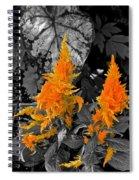 Golden Accentuation Spiral Notebook