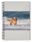 Golden At The Beach Oil Spiral Notebook