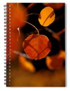 Golden Beauty Spiral Notebook