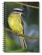 Golden Beauty... Spiral Notebook