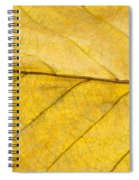 Golden Beech Leaf Spiral Notebook