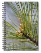 Golden Catkins Of The Great Pine Spiral Notebook