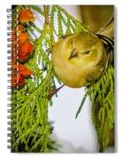 Golden Christmas Finch Spiral Notebook