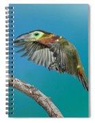 Golden-collared Toucanet Spiral Notebook