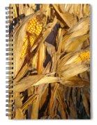 Golden Corn Spiral Notebook