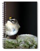 Golden-crowned Kinglet Spiral Notebook