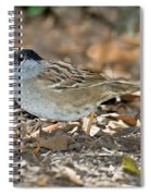 Golden-crowned Sparrow Spiral Notebook