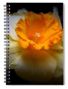 Golden Daffodils Spiral Notebook