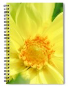 Golden Daisy Spiral Notebook