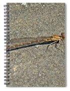 Golden Damselfly - Odonata - Suborder Zygoptera Spiral Notebook