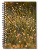 Golden Dew Drops Spiral Notebook