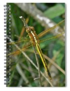 Golden Dragonfly At Rest Spiral Notebook