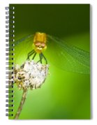 Golden Dragonfly On Perch Spiral Notebook