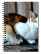 Golden Eyed Ferrel Spiral Notebook