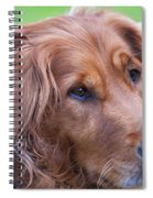 Golden Girl Spiral Notebook