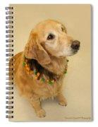 Golden Halloween Spiral Notebook