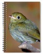 Golden-headed Manakin Spiral Notebook