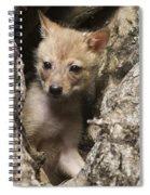 Golden Jackal Canis Aureus Cubs 2 Spiral Notebook