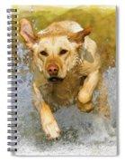 Golden Labrador Spiral Notebook