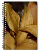 Golden Leafed Abstract 2013 Spiral Notebook