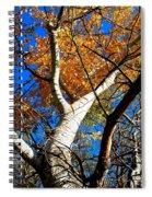 Golden Leaves II Spiral Notebook