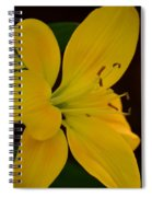 Golden Lily Glow Spiral Notebook