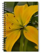 Golden Lily Sway 2013 Spiral Notebook