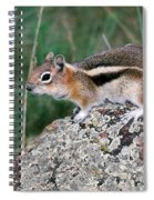 Golden Mantled Ground Squirrel Spiral Notebook