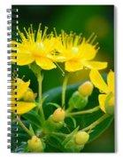 Golden Miracles Spiral Notebook