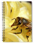 Golden Nectar  Spiral Notebook