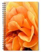Golden Peach Rose Spiral Notebook