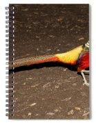 Golden Pheasant Male Spiral Notebook