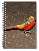 Golden Pheasant Pair Spiral Notebook