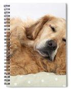 Golden Retriever And Orange Cat Spiral Notebook
