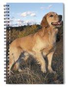 Golden Retriever Dog Spiral Notebook