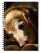 Golden Retriever Dog Sleeping In The Morning Light  Spiral Notebook