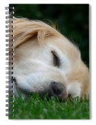 Golden Retriever Dog Sweet Dreams Spiral Notebook