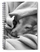 Golden Retriever Dog Under The Blanket Spiral Notebook