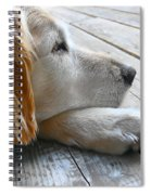 Golden Retriever Dog Waiting Spiral Notebook