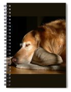 Golden Retriever Dog With Master's Slipper Spiral Notebook