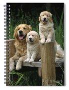 Golden Retriever Dog With Puppies Spiral Notebook
