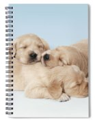 Golden Retriever Puppies Asleep Spiral Notebook